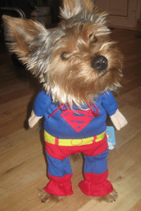 chien superman